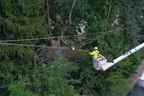 Vegetation management crew clearing a tree from a power line